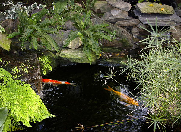 Lic pool namibia koi ponds for Ornamental fish pond construction